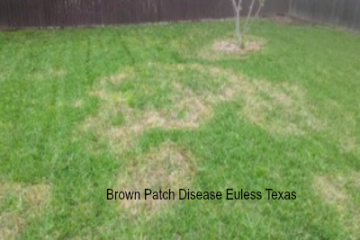 Does Your Lawn Have Brown Patch?