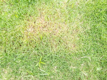 What to Do About Dry Hot Spots in Lawns