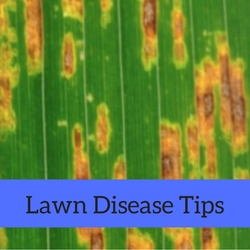 Lawn Disease Quick Tips