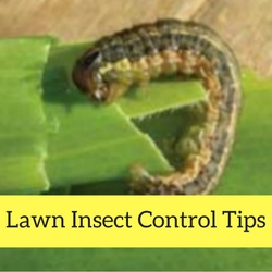 Lawn Insect Control Quick Tips