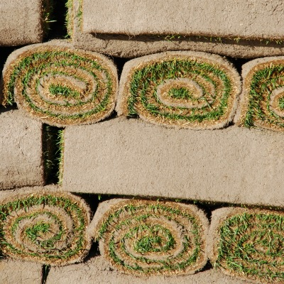 How to Maintain New Sod