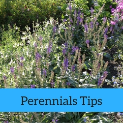 Perennials Quick Tips