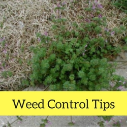 Weed Control Quick Tips