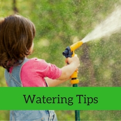 Water Quick Tips