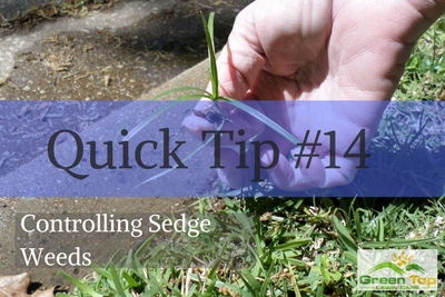 Quick Tips #14:  Controlling Sedge Weeds