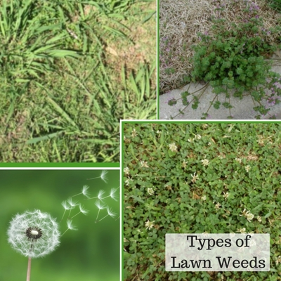 how to get a green lawn without weeds