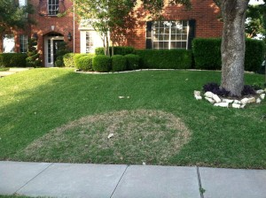 Fighting Brown Patch Disease in your Lawn