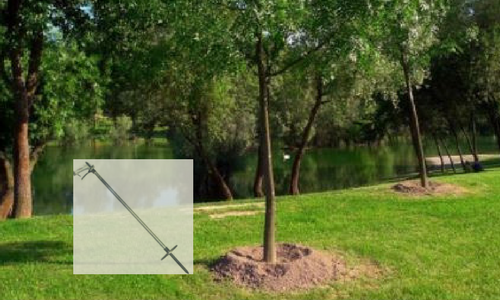 Deep Root Fertilization on new tree